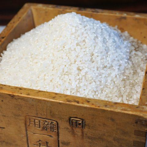 【お米の保存】袋のままはNG?場所・容器・期間を押さえ美味しさを保とう!